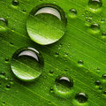 Water drops on fresh green leaf Royalty Free Stock Photo