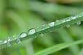 Blade of grass with water drops