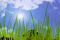 Water drops on the green grass with sun and blue sky background Royalty Free Stock Photography