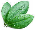 Water drops on a green leaf background Stock Images