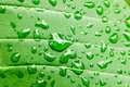 Water drops on green leaf macro background Royalty Free Stock Photo