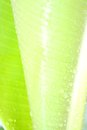 Water drops on green leaf macro closeup detail Royalty Free Stock Images