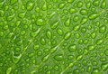 Water drops on leaf close up of droplets green background Stock Photos