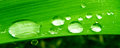 Water drops on plant macro closeup detail of drop green leaf or clear rain Stock Photography