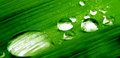 Water drops on plant macro closeup detail of drop green leaf or clear rain Royalty Free Stock Photo