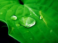Water drops on plant macro closeup detail of drop green leaf or clear rain Stock Images