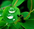 Water drops on plant macro closeup detail of drop green leaf or clear rain Stock Photo