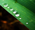 Water drops on plant macro closeup detail of drop green leaf or clear rain Stock Image