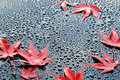 Water drops on polished black car paint with red leafs a blue sky Royalty Free Stock Images