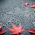 Water drops on polished black car paint with red leafs a leaf blue sky Royalty Free Stock Images
