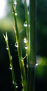 Water drops on small bamboo detail Stock Photo
