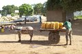 Water ethiopian man is putting the storage tanks on the donkey carriage at the omorate village on the omo rive near the ethiopian Stock Photos