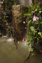 Water fall in garden Royalty Free Stock Photography