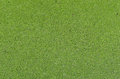 Water fern pattern of azolla texture Stock Photos