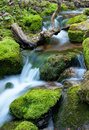 Water flowing over rocks covered with moss in small stream Royalty Free Stock Images