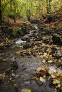Water flowing through woods beautiful wild stream rural northwestern english in wigan england Royalty Free Stock Image