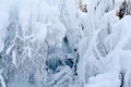 Water froze on branches of trees and bushes in winter forest Royalty Free Stock Photography