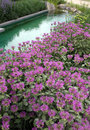 Water garden terrace with swimming pool and bed with aster flowers Stock Photography