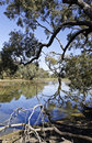 Water Hole (Billabong) Stock Image