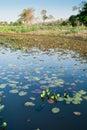 Water hole in Pantanal wetland region, Brazil