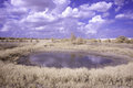 Water hole under a cloudy blue sky out in field with white clouds Royalty Free Stock Photography