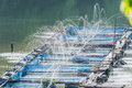 Water injection, oxygen In Nile tilapia Fish farms. Royalty Free Stock Photo