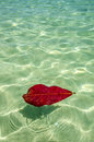 Water and leaf of an almond tree floating in shallow tropical Royalty Free Stock Images