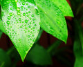 Water on leaves Royalty Free Stock Images