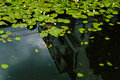 Water lilies on a canal in hamburg Royalty Free Stock Images