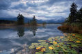 Water lilies on lake barmsee in clouded morning bavarian alps germany Royalty Free Stock Images