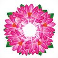 Water lily flower background