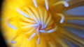 Water Lily Heart Royalty Free Stock Photo