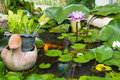 Water lily lotus flower with green leaves in the pond Stock Photos