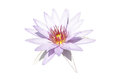 Water lily pale purple isolated on white background Royalty Free Stock Photo