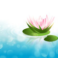Water lily pink at green leaf over blue background copy space Royalty Free Stock Photography