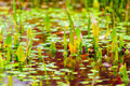 Water plants blood water danger poison Royalty Free Stock Photo