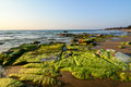 Water plants and mosses on the beach Stock Images