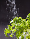Water pouring lettuces Stock Image