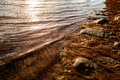 Water s edge gentle waves near shore with beach grass and rocks at sunset Stock Image
