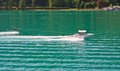 Water skiing on lake worth worthersee austria Stock Photo