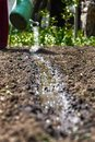 Water the soil from the watering can. Close-up, concept gardening, yard work Royalty Free Stock Photo