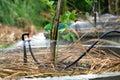 Water sprinkler irrigation Royalty Free Stock Photo