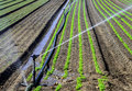 Water sprinkler system working on a nursery plantation Royalty Free Stock Images
