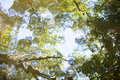 Water surface with reflection of the green trees Royalty Free Stock Photo