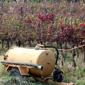 Water tank to irrigate the vines and the grapes during the summe dry season Stock Photography