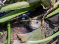 Water turtle sits in the water and stuck its head between the aquatic plants