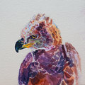 Watercolor of African crowned eagle on white Royalty Free Stock Photo