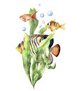 Watercolor aquarium card with fish. Hand painted underwater print with tropical fish, seaweed branch and air bubbles Royalty Free Stock Photo