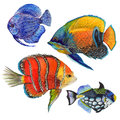 Watercolor aquatic underwater colorful tropical fish set. Red sea and exotic fishes inside.
