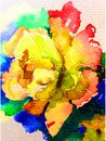 Watercolor art background nature  fresh colorful yellow rose flower single delicate romantic love Royalty Free Stock Photo